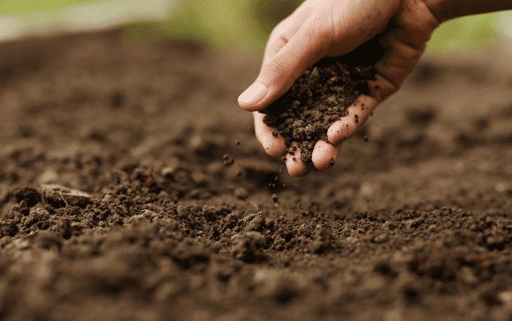 los fertilizantes